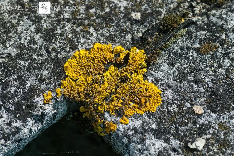 yellow moss macro texture